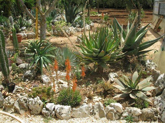 Pietre naturali in giardino crea il giardino roccioso for Pietre da giardino